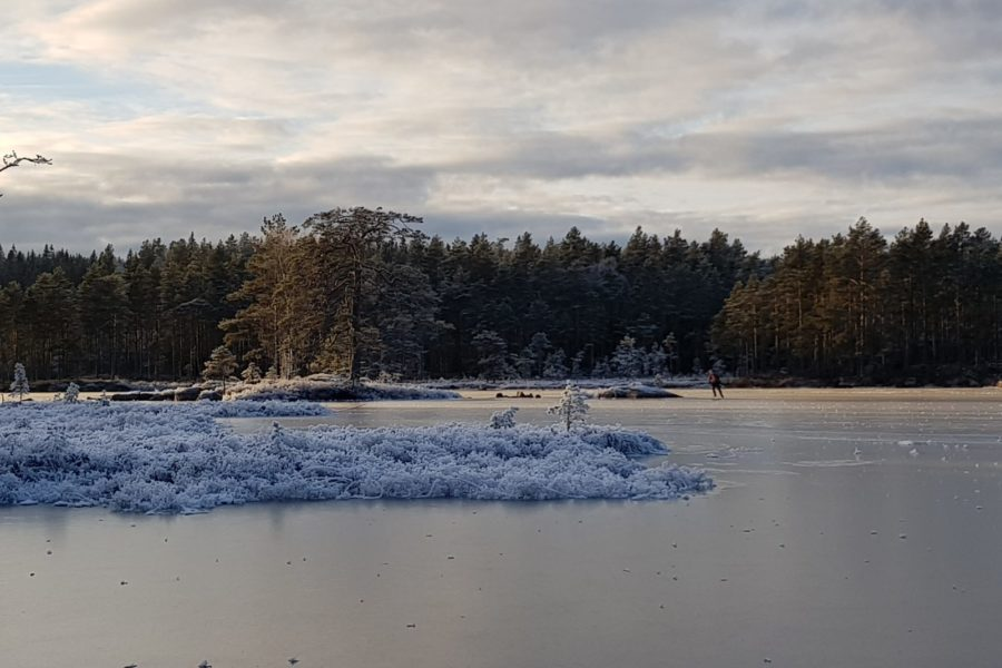 Forest lake covered with smooth ice